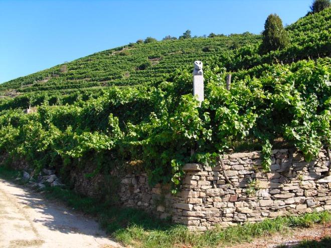 Hirtzberger Weingarten (1 von 1)